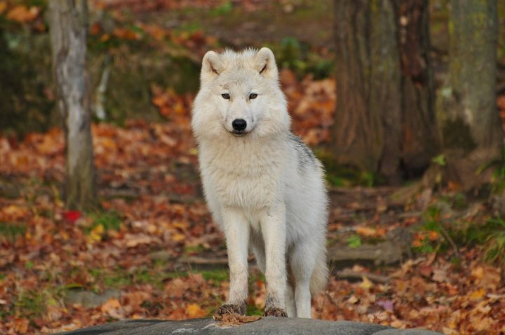 Be a wolf not a sheep: why content marketing needsbite